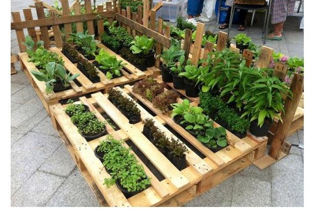 Resultado de imagen de huerto ecologico escolar