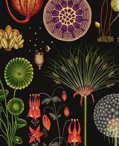 bf610065d6b5fbe332e6c099a847ce3d--katie-scott-botanicum-katie-omalley