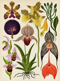 botanicum 2