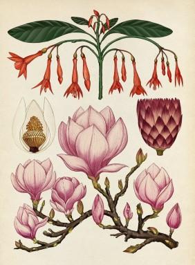 Botanicum-Katie-Scott (5) 800