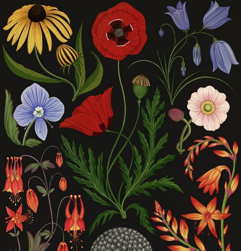 Botanicum-Katie-Scott (7) 800